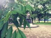 Июньская прогулка по Биробиджану_2