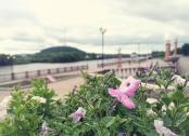 Июньская прогулка по Биробиджану_8