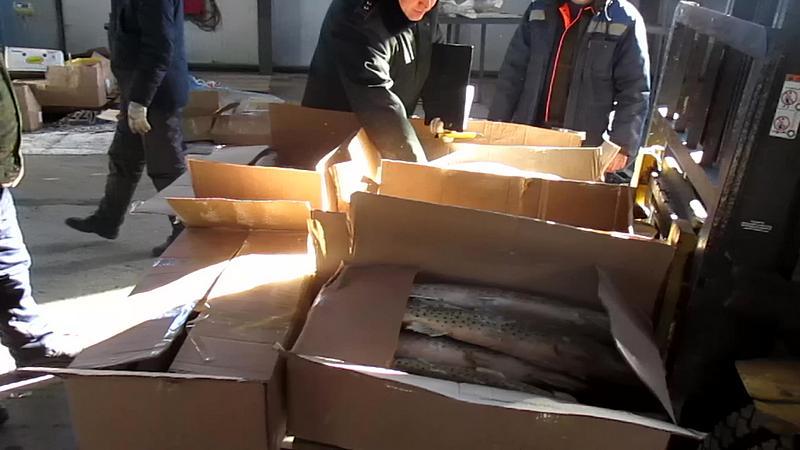15 тонн незадекларированной рыбы пытались провести в КНР