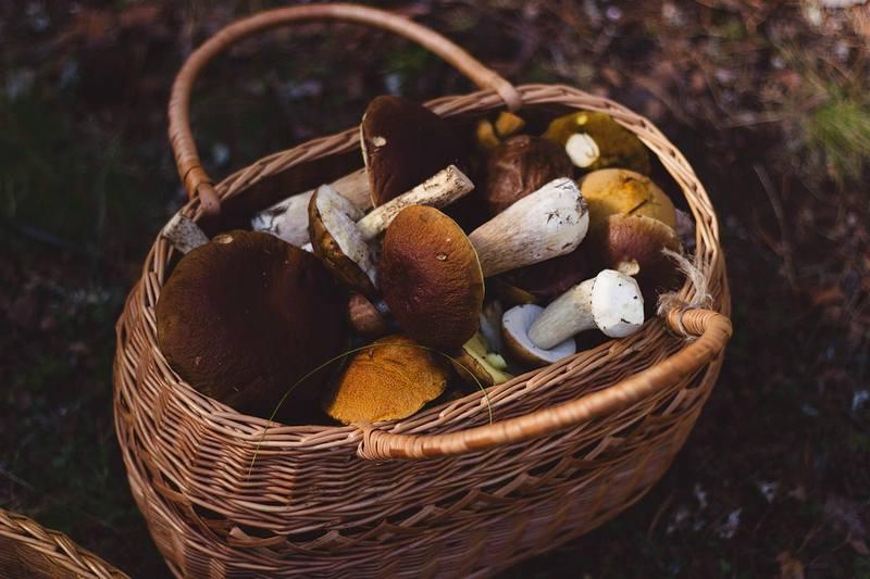 ВЕАО отыскали  тело грибника, которого злоумышленники  заставляли собирать коноплю