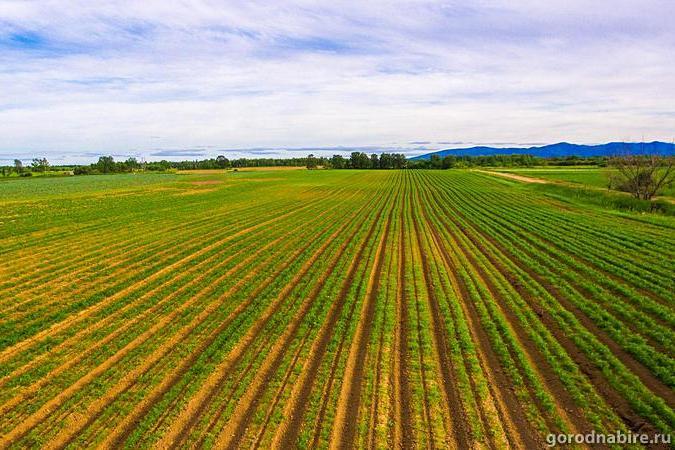 «Дальневосточные гектары» организуют три новых населенных пункта вДФО— Трутнев
