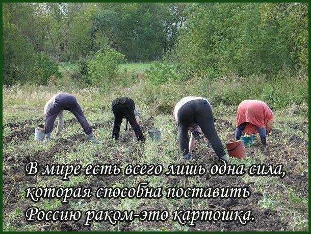 zasadit-tete